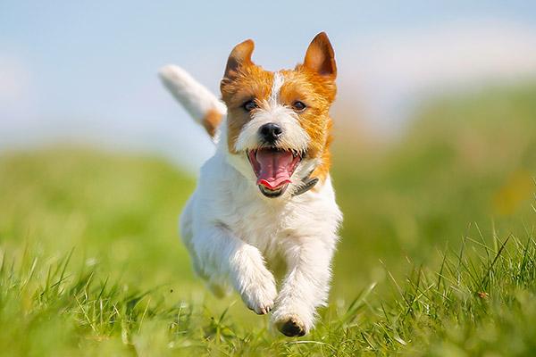 Four Paws Inn - Dog running