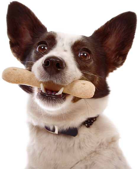 Four Paws Inn | Pet Boarding Dog Daycare Pet Grooming in Converse TX